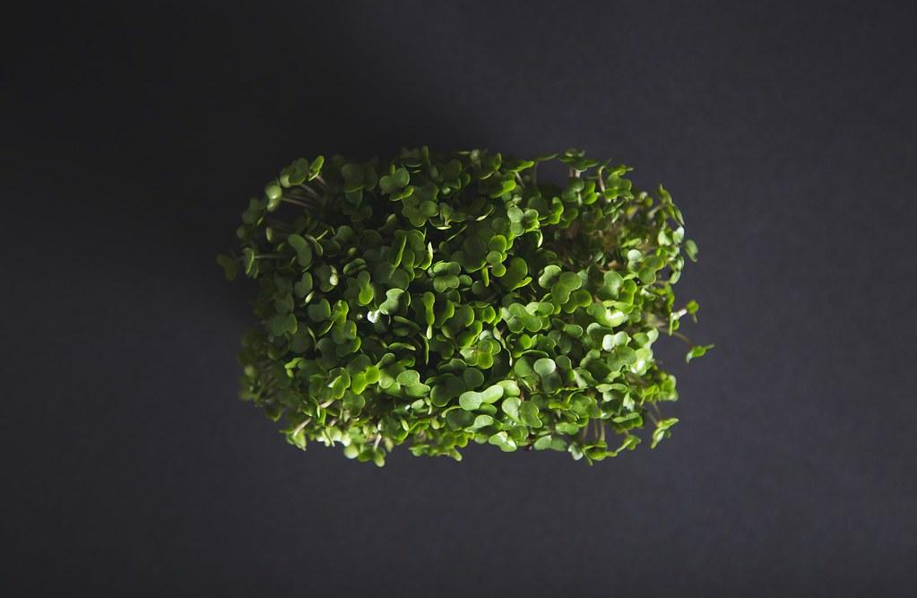 ผักไมโครกรีน (microgreen)