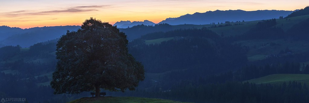 Tree at dawn panorama - Emmental