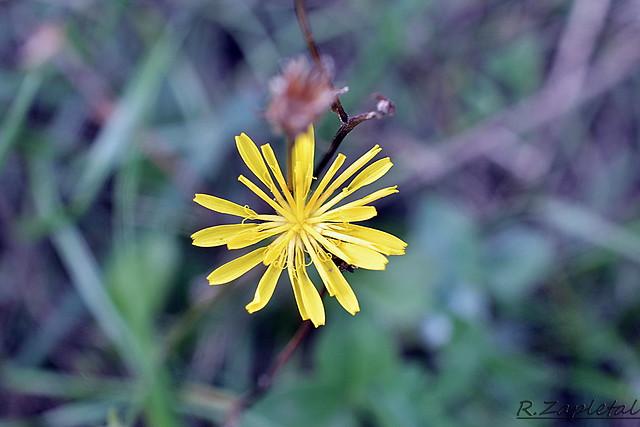 Flowers, Nikon D3100, AF-S DX Micro Nikkor 40mm f/2.8G