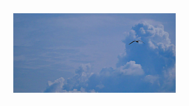 Wind beneath the wings, Panasonic DMC-GX80, LUMIX G VARIO 45-150/F4.0-5.6
