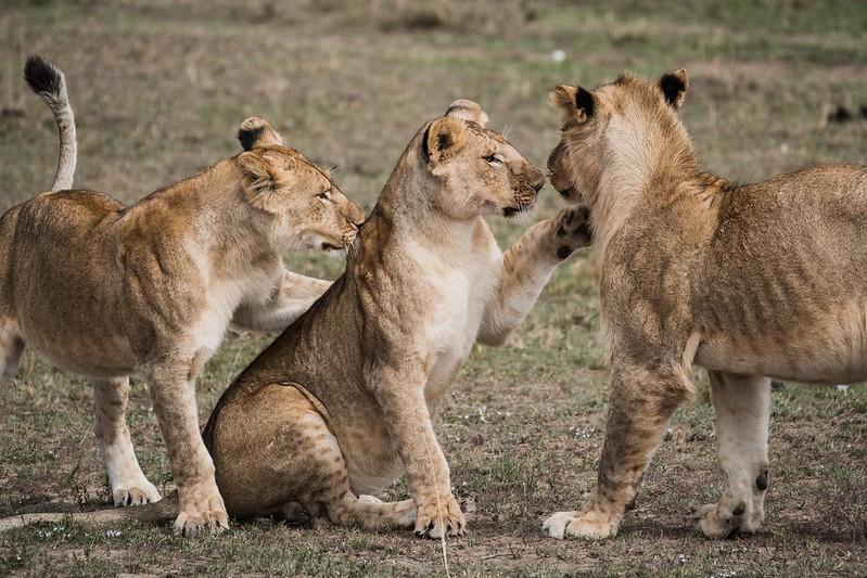 5 Day Kruger Park Safari