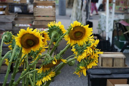 September 8, 2018 Mill City Farmers Market