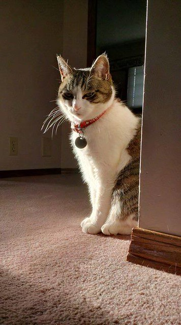 LOST: Grey, white & orange short hair cat in #Edgemont (near Edgemont school). Pls RT & share to help find Pinky. YYC Pet Recovery shared Rumi Habib's post. Hello, our cat Pinky is lost in Edgemont (near Edgemont school). Gray, white, and orange short hai