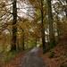 Autumn leaves at Ambleside