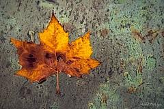 C'est bientôt l'automne - Photo of Parent