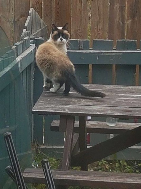 Cat sighting #edgemont Pls watch share & RT YYC Pet Recovery shared Laura YM's post. Sighting. Been seeing this little guy wondering around edgemont the past couple days. Not sure if hes missing or lives in the area. 2018-09-17T17:43:39.000Z by YYC Pet Re
