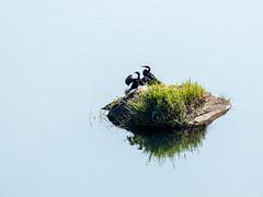 2018,Uganda, The Haven, birds
