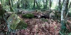Le « Dolmen de Trébun » près de Pluherlin - Morbihan - Août 2018 - 04