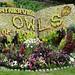 Minerva's Owls Flower Display 2018