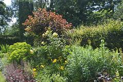2018.06.20.070 CASTILLON - Les jardins, allée des fleurs