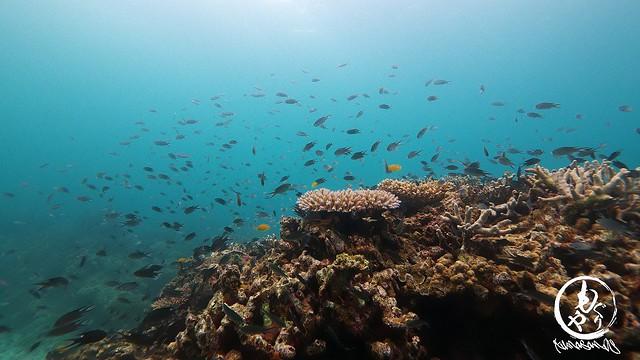 熱帯魚たちいっぱい♪
