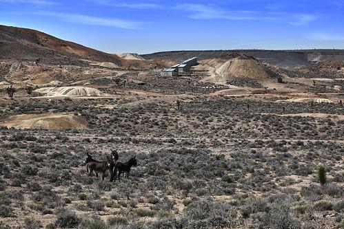 nv nevada esmeralda goldfield canon 6d ef24105f4l burro abandoned forgotten wild wildlife