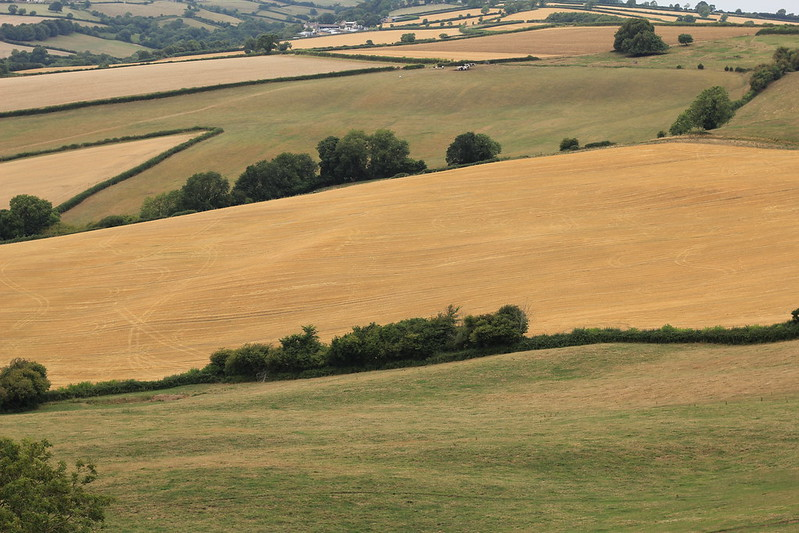 Landscape arcehology