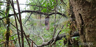 Unknown spider web - 20180603_090652