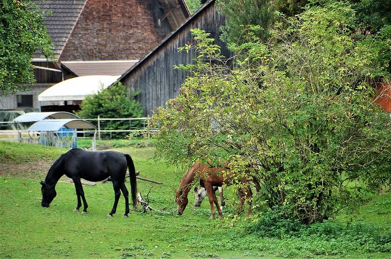 Horses 16.09 (2)