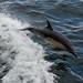 Kylie the Dolphin
