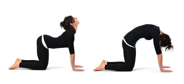 Bài tập yoga mèo - bò chữa thoái hóa cột sống