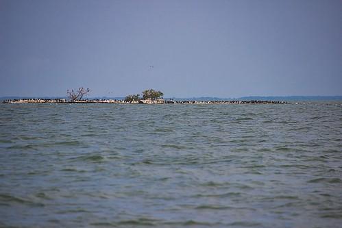 IMG_12296a_Starve_Island