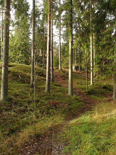 SÖ E55 Glesa skogen