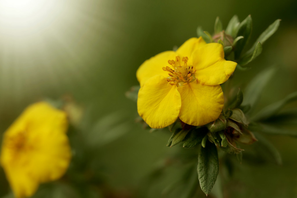 Of Yellow And Green Cellophane Flowers Of Yellow And