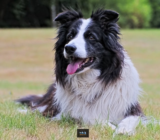Dog Portrait: Nelly - 1