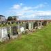 Hawkhill Cemetery Stevenston (185)