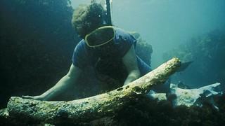 Gilt dragon shipwreck site