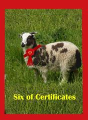 06 certificates