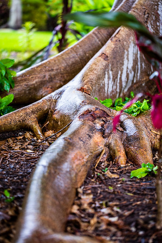 arnoldphotog lakespark landscape nature wildlife fortmyers florida unitedstates us cypresstree cypress tree roots rain tropical