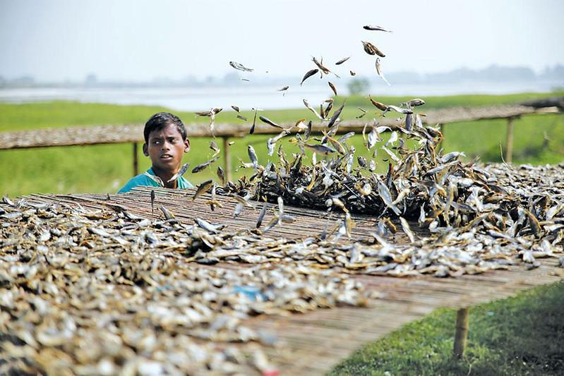 बिहार में मछली की माँग 6.42 लाख मीट्रिक टन से अधिक है