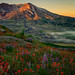 St Helens Paintbrush by Dan Mihai