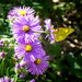 Butterfly Garden in the Fall (1)