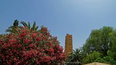 Al Mansourah- Tlemcen