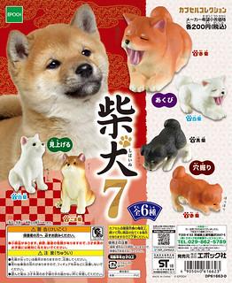 療癒萌萌小柴又來了!EPOCH 「柴犬7」大好評登場!