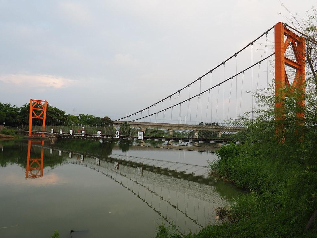 官田菱角 (1)