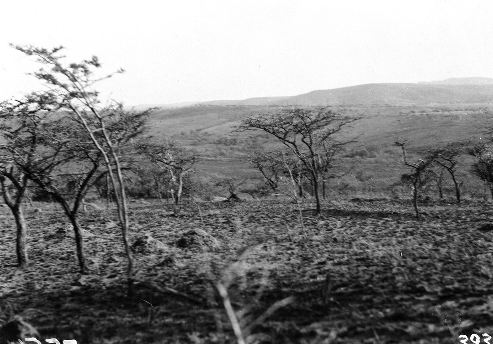 Квазулу-Наталь. Умфолози. Пейзаж в парке Умфолози.