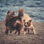 2018:08:26 17:02:19 - Dog Fun 2 - Hundestrand - Ostsee - Schleswig-Holstein - Deutschland
