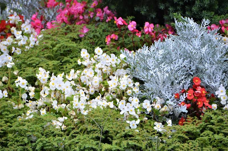 Flowerbed 31.08 (2)