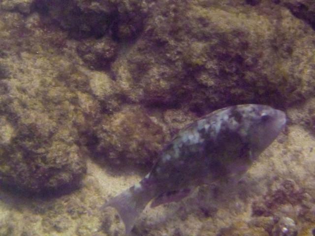Kapalua Bay