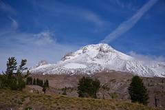 Mt Hood Treeline