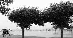 VKKT TRA • Am Skulpturenpfad • Vier, im Regen • Ilford Delta™ 100
