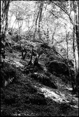 ... aux bois tremblants - Photo of Sardy-lès-Épiry