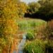 Autumn Pondlife