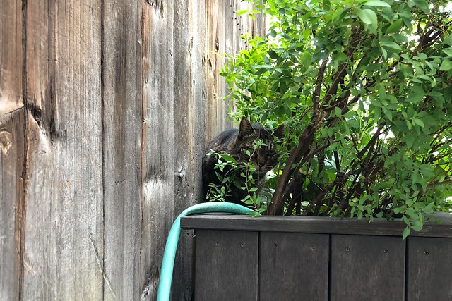 Today's Cat@2018-09-04
