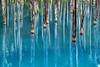 Photo:青い池 II By Raymond.Ling.43