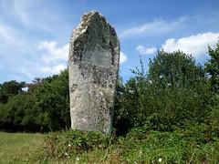 Le menhir dit « La Pierre Longue » près de Pluherlin - Morbihan - Août 2018 - 02