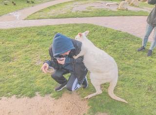 Jisung with Kangaroo