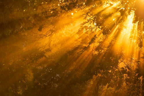 charlotte clarkscreeknaturepreserve fall landscape mecklenburgcounty nature northcarolina unitedstates us fog sun light orange beams