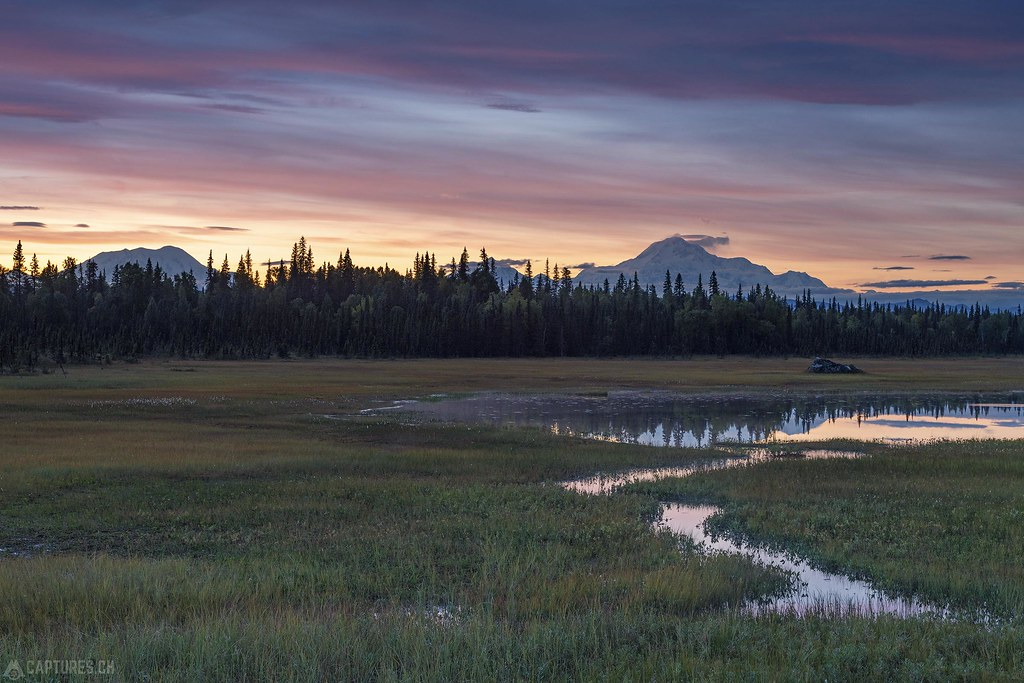 Dusk in the swamp - Alaska