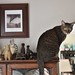 Cricket on the china cabinet by rootcrop54
